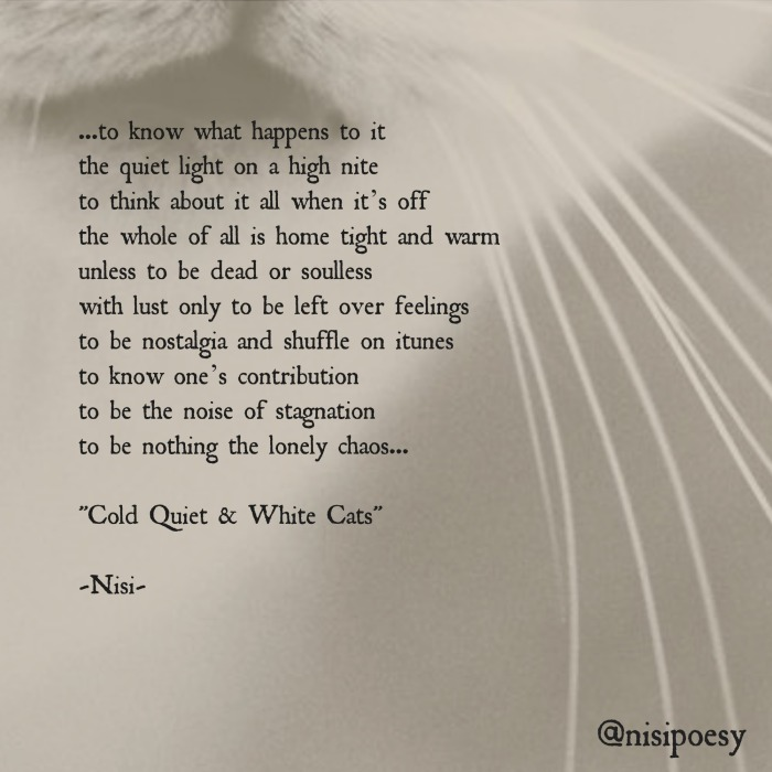 Cold Quiet & White Cats 2.jpg