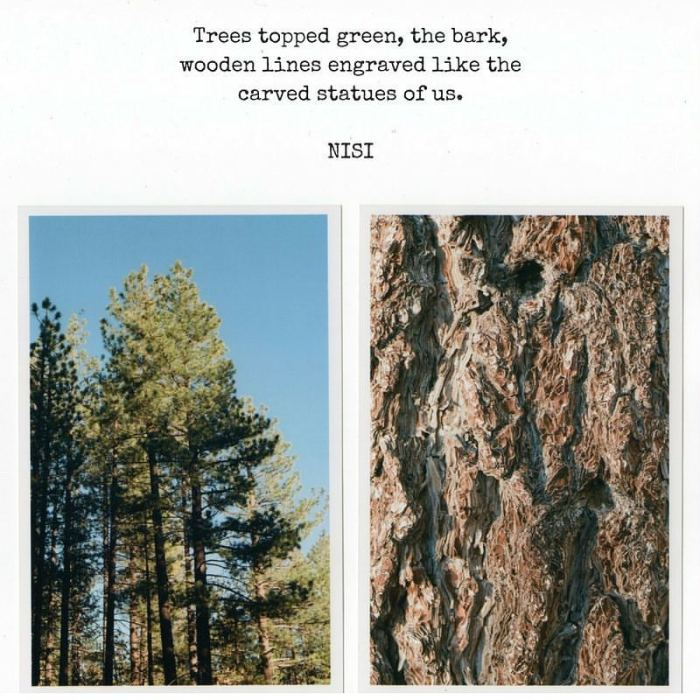 We are Trees | A haiku poem with photographs taken with my Canon ae-1 program in Big Bear, Spring 2017 | Nisi Poesy | Haiku poetry, travel photography, poets, poets of PInterest